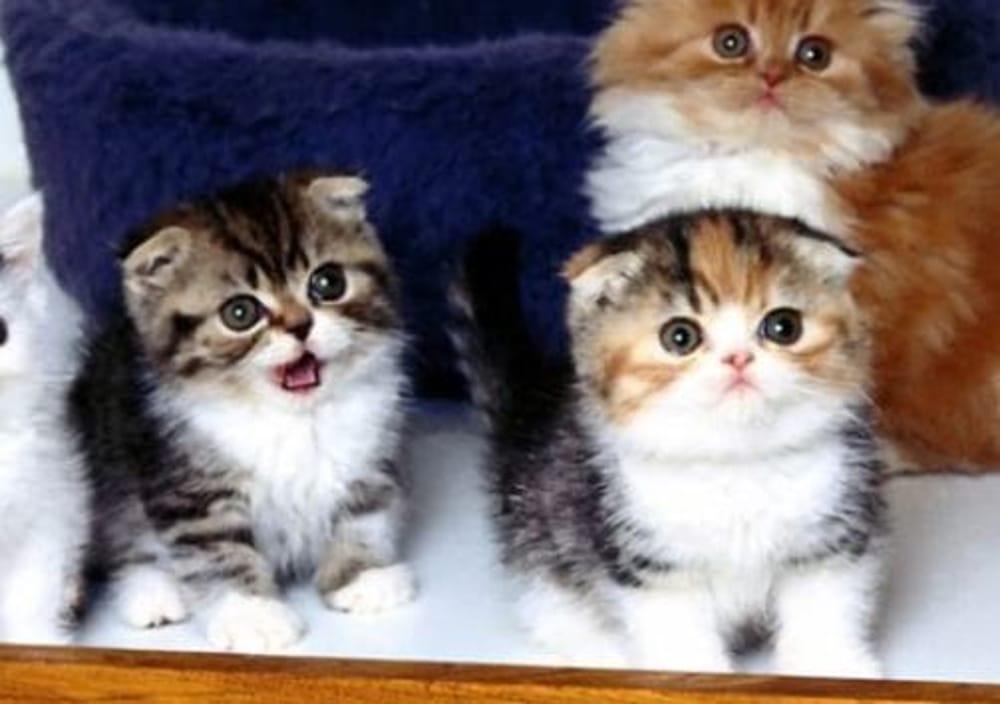 ecceteramagazine - gattini