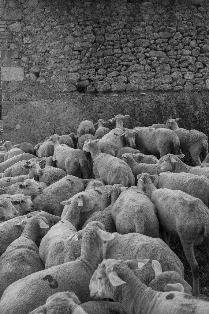 A Cartore, prima della mungitura - Giulio Burroni