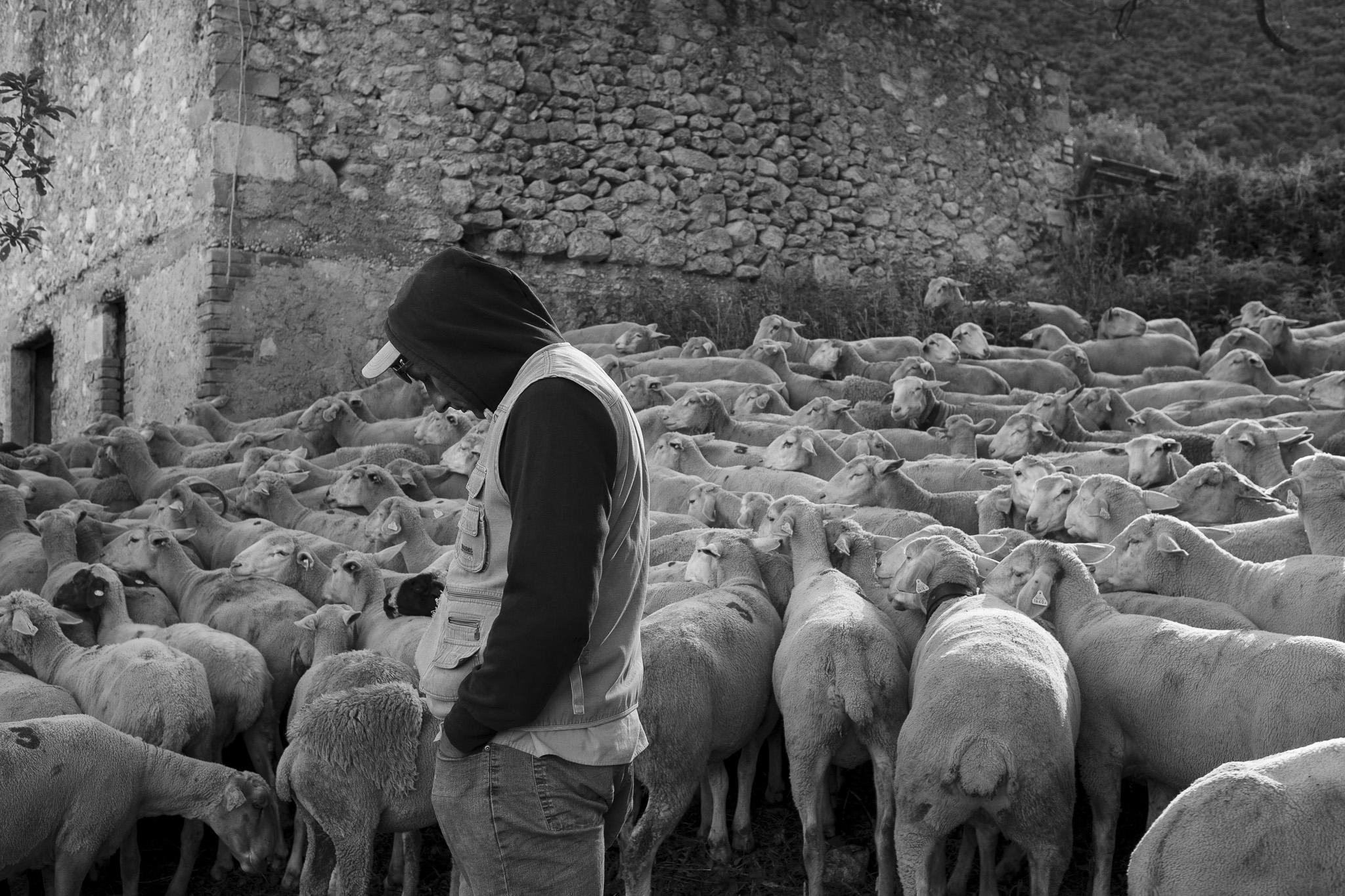Cartore, transumanza - Giulio Burroni